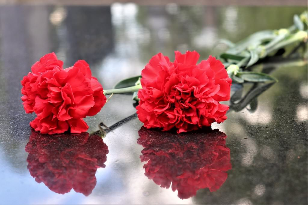 two-red-carnations-4176754_1920.jpg