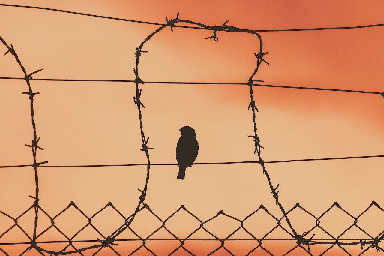bird-on-a-wire-5243730_1920.jpg